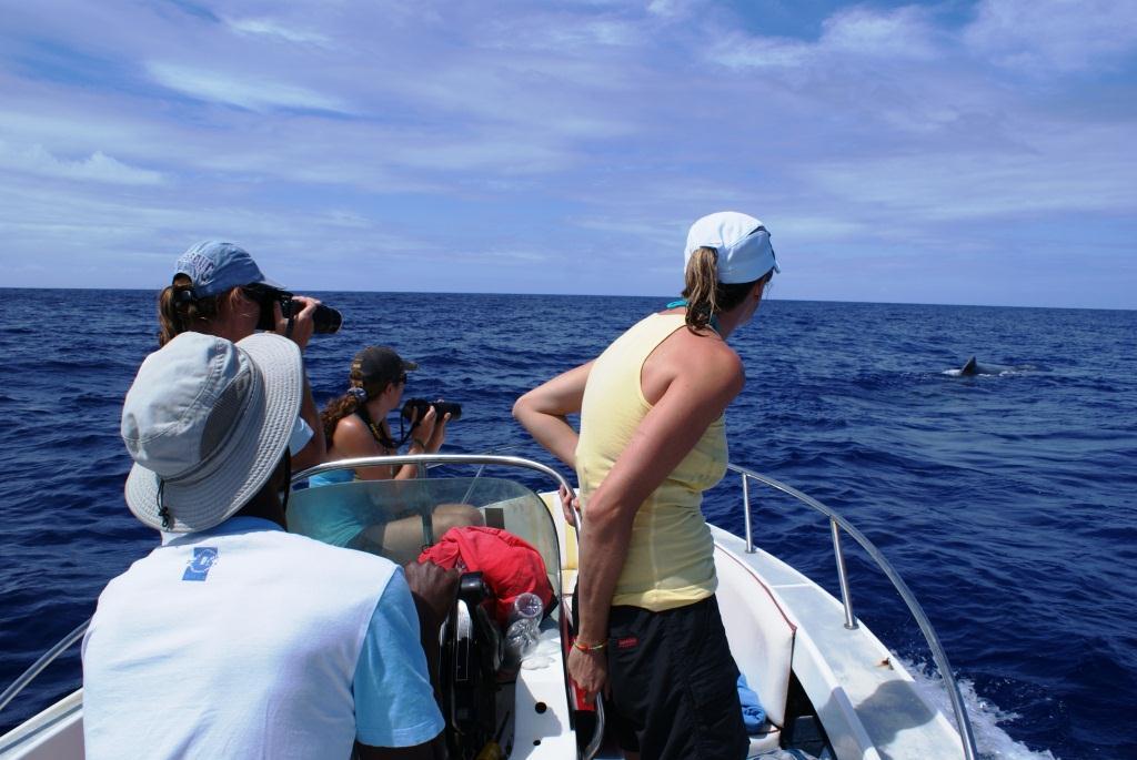 Sperm whale gazing