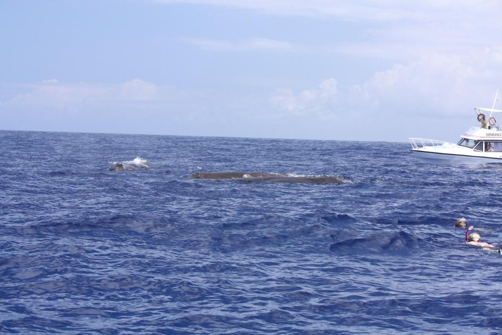 swimming-with-sperm-whales-pink-snorkel