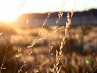 Sunrise grass Keetmanshoop
