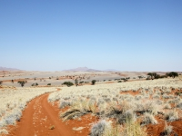 Wolwedans desert roads