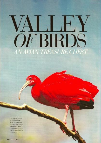 South birds