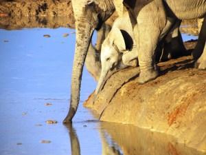 Colleen Blaine - elephant water addo