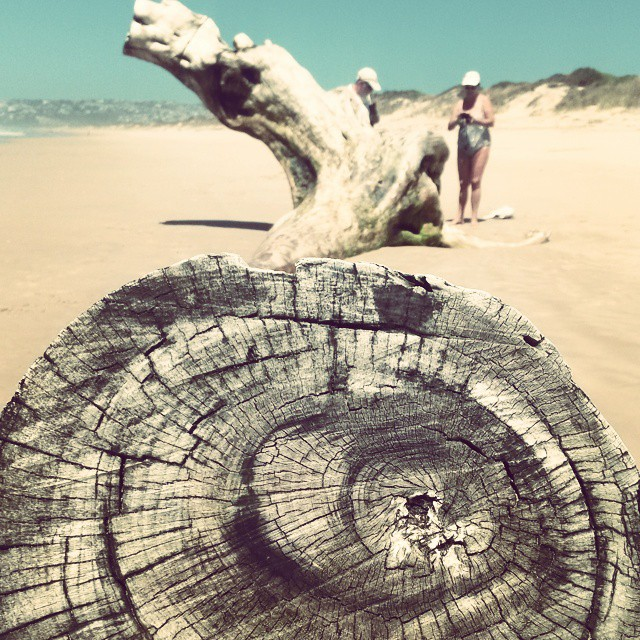 Death of a yellowwood. The remains of what once was no doubt a statuesque tree, lies like a monument to the floods along Keurbooms Beach. #driftwoodgiants #driftwood #beach #gardenroute #trees #food