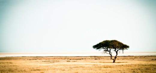 Etosha 1 Namibia