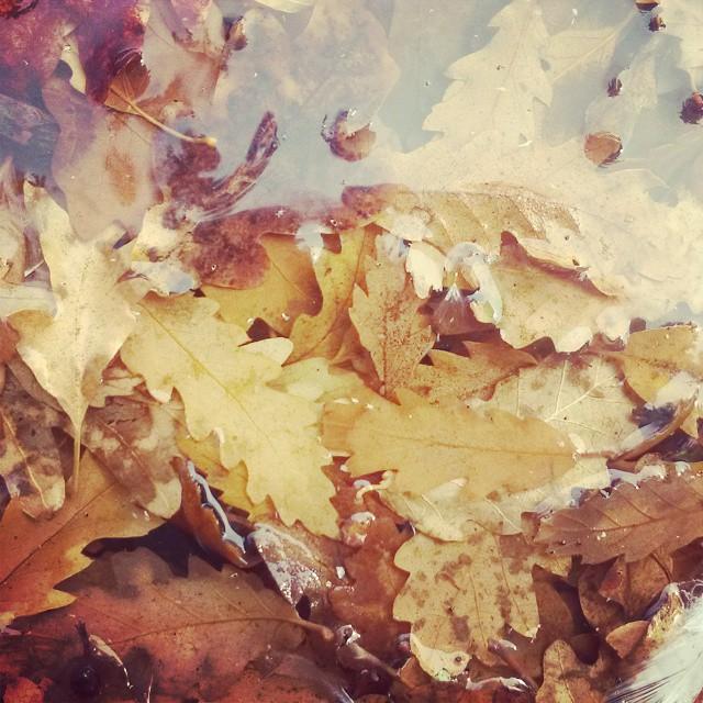 Autumn. #leaves #reflection #CapeTown #water #patternsinnature