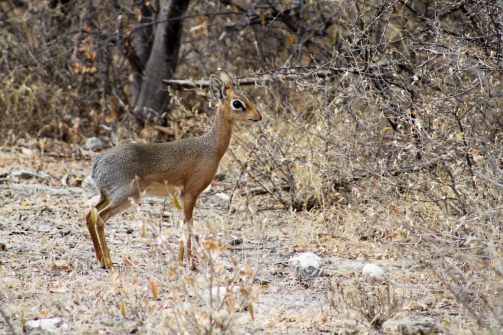 Onguma Reserve wildlife