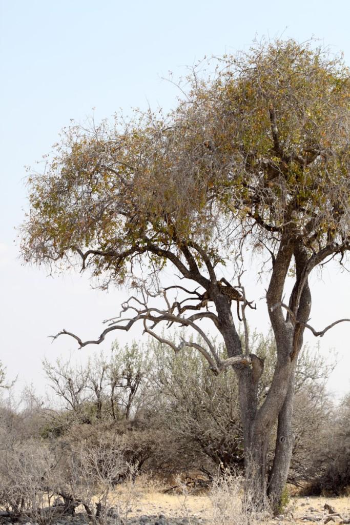 etosha-national-park7