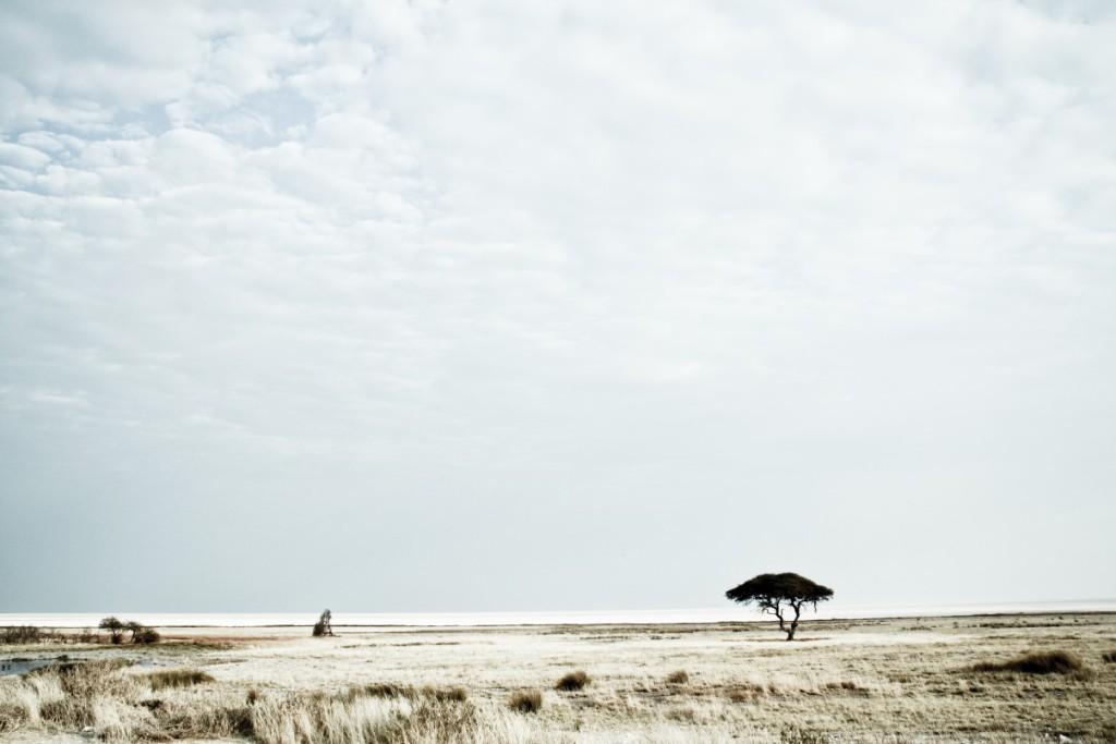 Etosha-national-park1