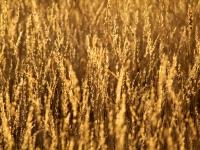Erongo morning grass