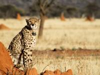 Okinjima namibia